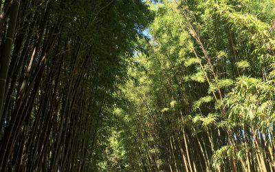 Visite de la Bambouseraie à Anduze en Cévennes. Bambous géants, Jardin Japonais, Village Laotien, Sequoias…